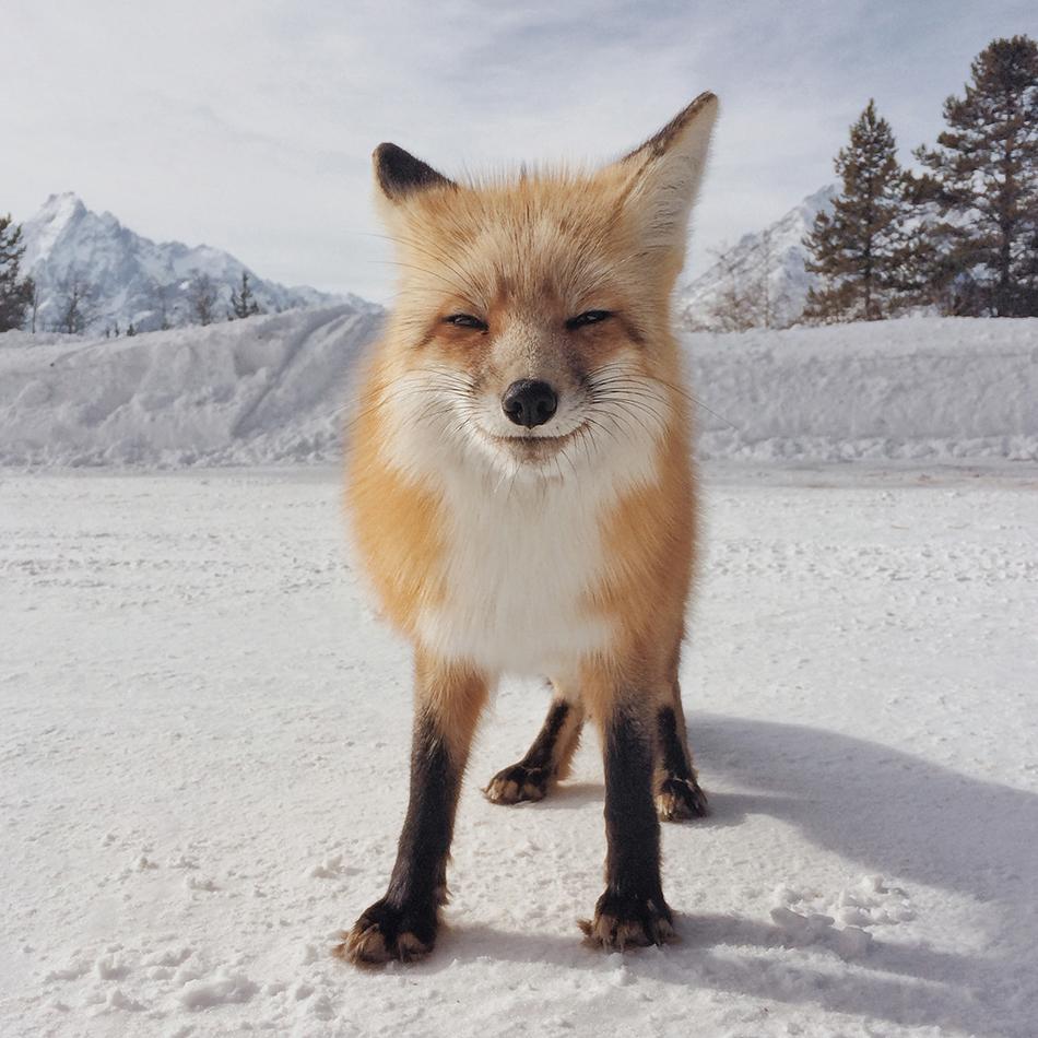 مقام اول شاخه حیوانات به عکسی از مایکل اونیل تعلق گرفت.