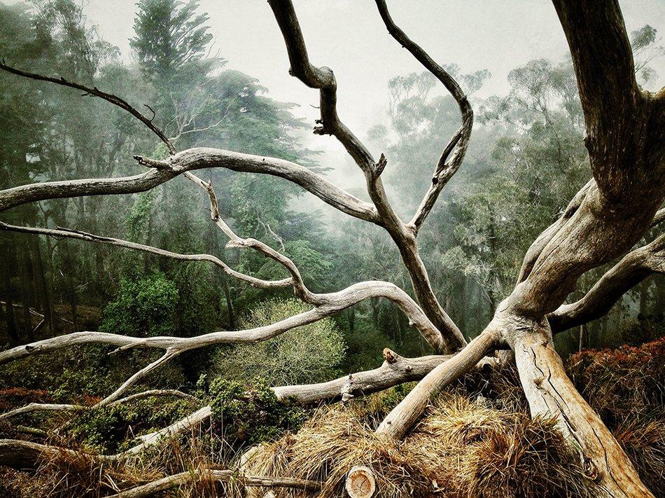 مقام اول شاخه درختان به این عکس از آئرون پایک رسید.
