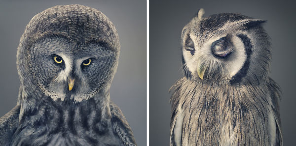 what-is-this-owl-thinking-w600