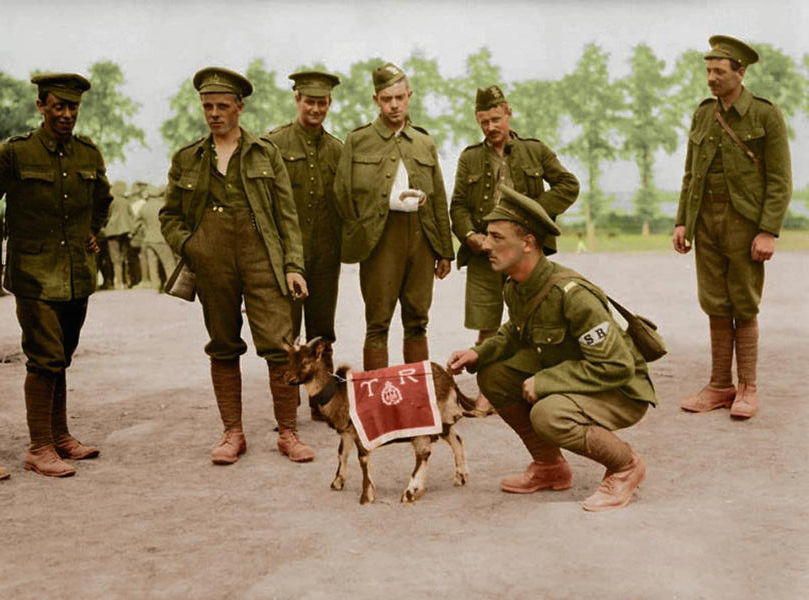 8-canadian-infantry-with-mascot-ww1-colour-w600