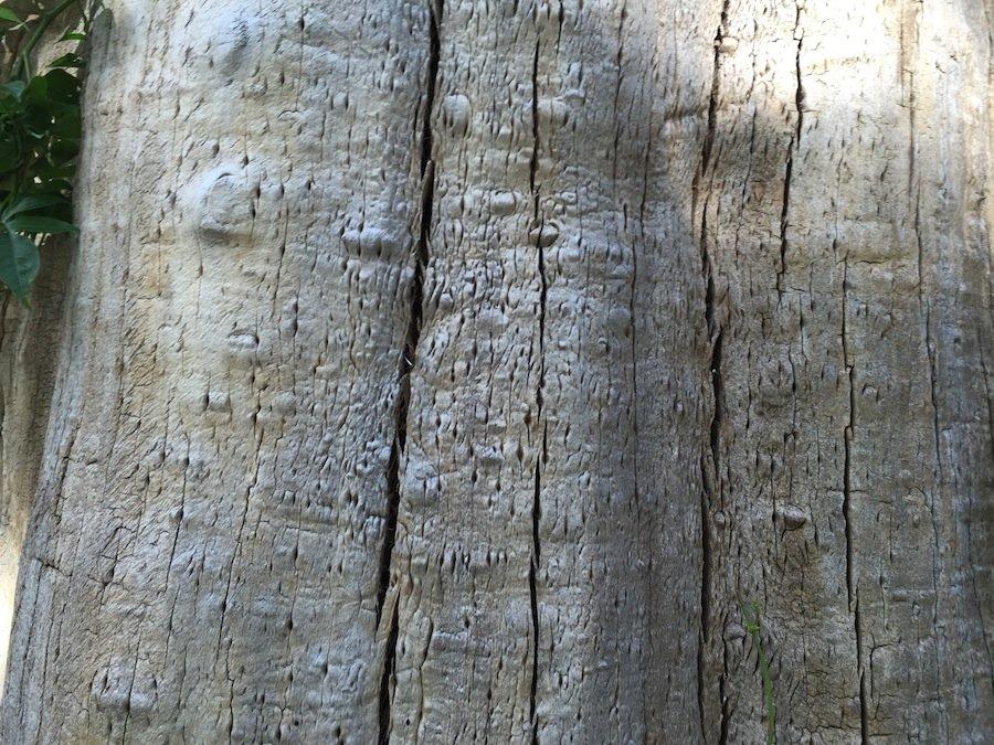 این یک تصویر از نمای نزدیک از سطح چوب درخت است که با آیفون ۶ گرفته شده. تمامی شکاف ها به راحتی دیده می شوند و رنگ ها شفاف به نظر می رسند.