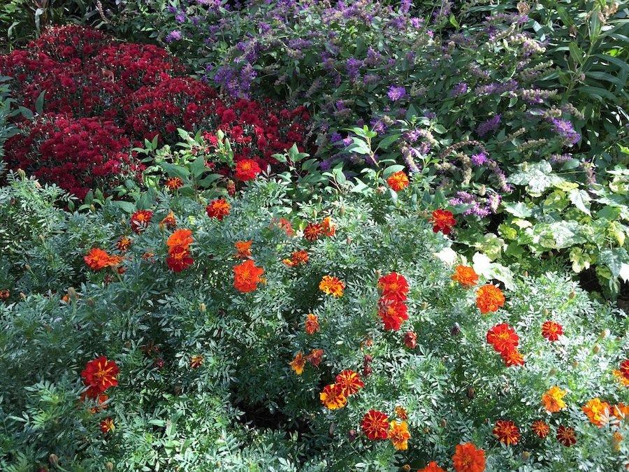 گل ها در این تصویر که با آیفون ۶ گرفته شده به نظر شفاف و خوش رنگ می آیند. اما در گوشه سمت راست پایین تصویر به نظر می رسد عکس مقداری سوخته اما سایر بخش ها متناسب هستند.