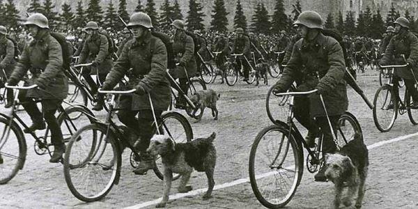 سگ های ضد تانک