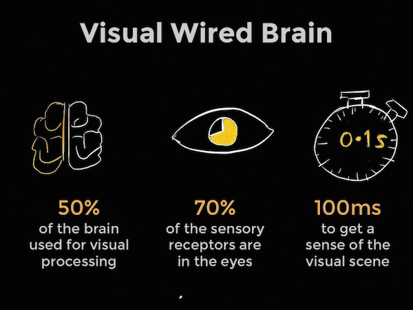visual-brain