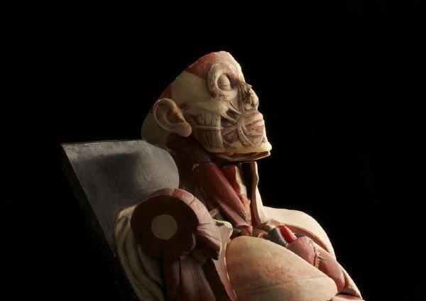 یک مدل آناتومی کهنه و فرسود که دانشگاهTrinity شهر دوبلین قصد دور انداختنش را داشته است.