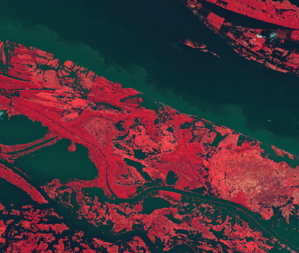 this-is-the-amazon-river-in-the-heart-of-northern-brazils-rainforest-vegetation-has-been-colored-with-shades-of-pink--the-darker-the-color-the-denser-the-vegetation-w600