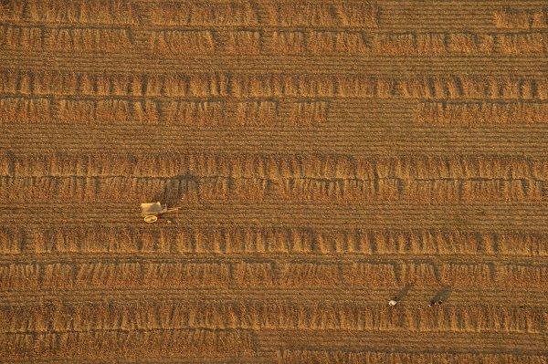 یکی از فینالیست های شاخه سفر؛ مزرعه ای در میانمار. عکاس در حالی که در یک بالن قرار داشته، این تصویر را به ثبت رسانده است.