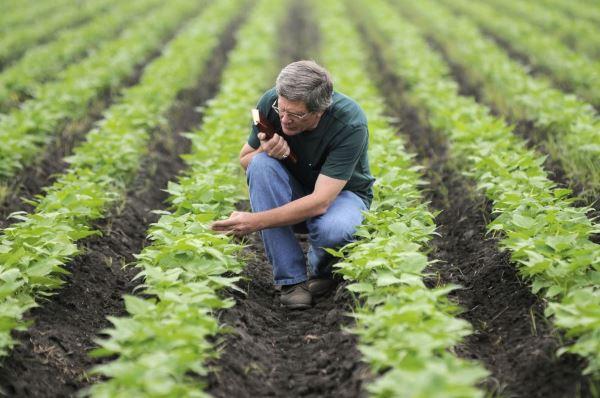 استیو بیبی در حال بررسی گیاهان کاشته شده.