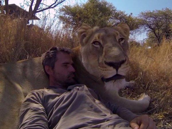 ظرف یک دهه اخیر، GoPro نامش را به عنوان گزینه اصلی برای فیلم برداری از سوی علاقمندان به ورزش ثبت کرده است. در این تصویر اما، کوین ریچاردسون کارشناس حیوانات را مشاهده می کنید که در یکی از صحراهای آفریقا به یک شیر نزدیک شده و با یکی از همین دوربین ها از خود فیلم گرفته است.