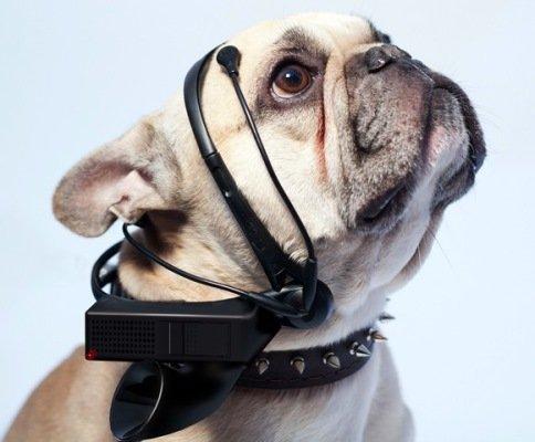 3-no-more-woof-dog-translator-1