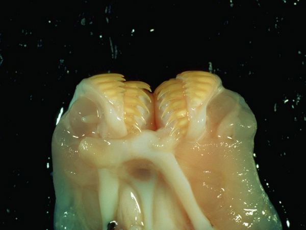 hagfish-corbis-01a-660x495