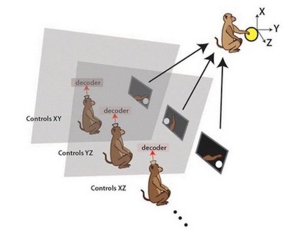 monkey-brain-interface (1)