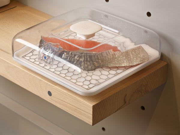 برای مثال محفظه ای که این ماهی در داخل آن قرار گرفته بر روی دمای ۲ درجه سلسیوس تنظیم شده است.