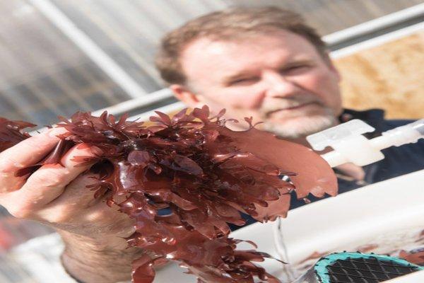 rsz_dulse-seaweed-bacon-2-1