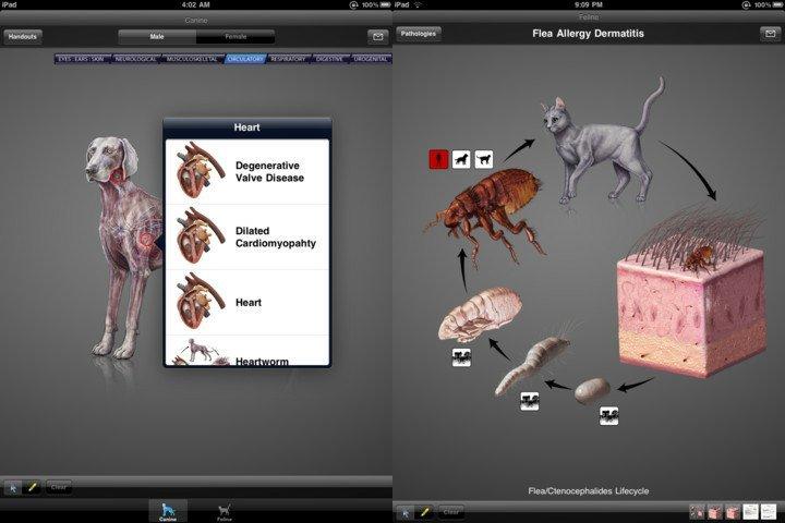 39999--idia-diagnostic-imaging-atlas-small-animal