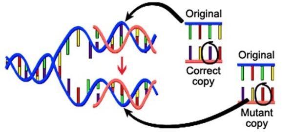 CGC-Mutation