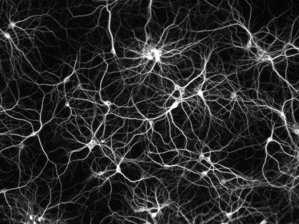 neuron-map
