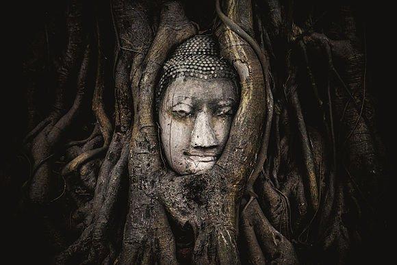 مقام پنجم: نمایی از تندیس بودا در یک درخت قرار گرفته شده، تایلند؛ ثبت شده توسطSiripatwongpin