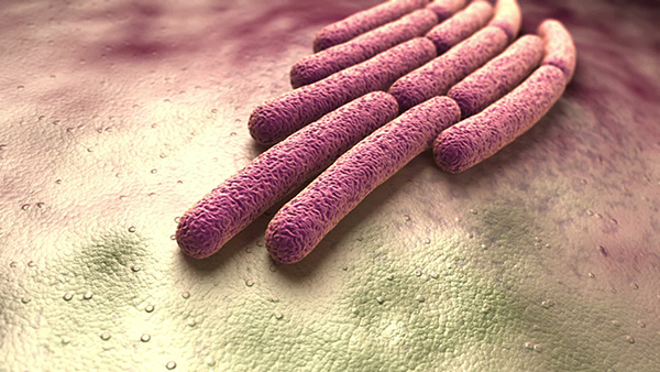 Bacteria6