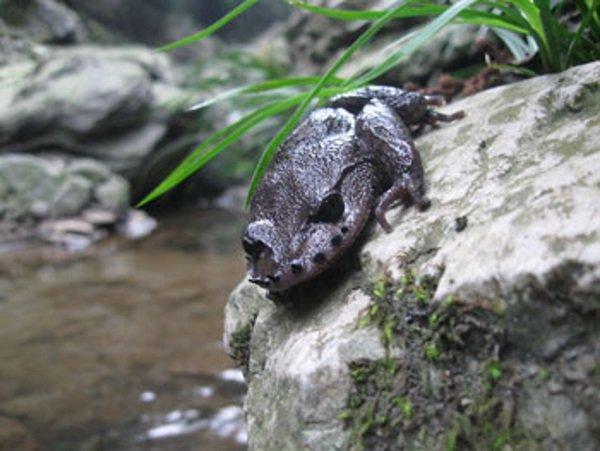 frog350
