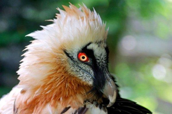 Vulture-ECKKFY-582x386
