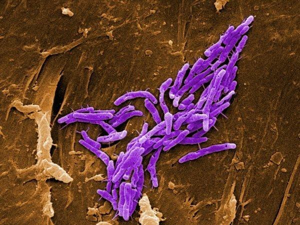 genus-mycobacterium