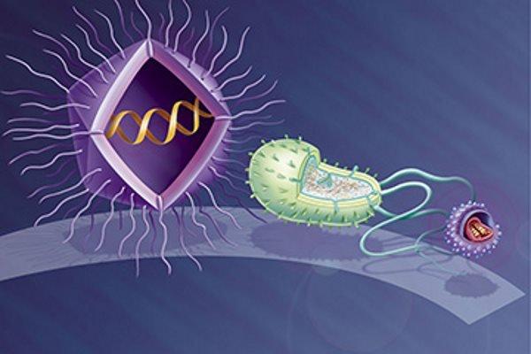 به ترتیب از راست به چپ: یک ویروس استاندارد، یک باکتری اشرشیا کلای، یک Mimivirus.