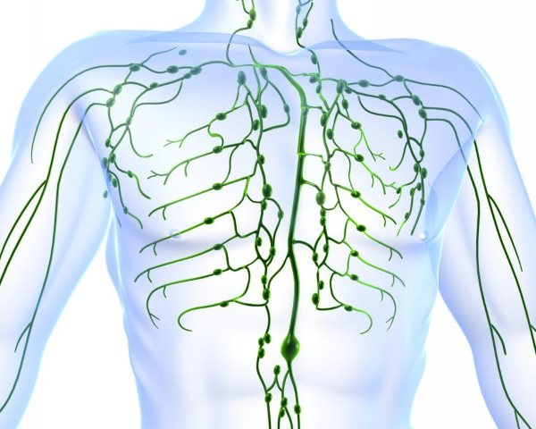 human-lymphatic-system