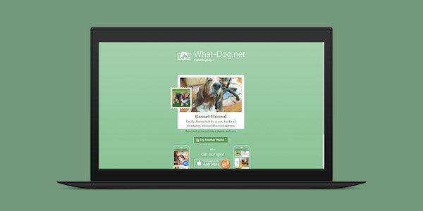 اپلیکیشن جدید مایکروسافت نژاد سگ ها را از روی تصویرشان تشخیص می دهد