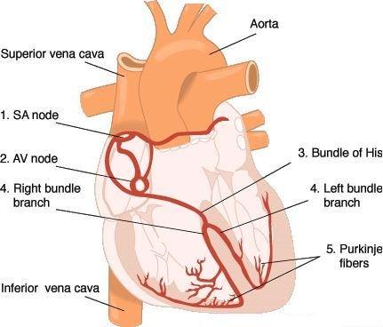heart4a
