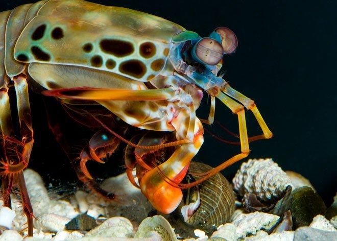 Os-female-striking-snail-b-med