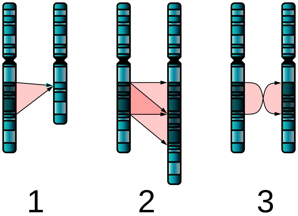Single_Chromosome_Mutations