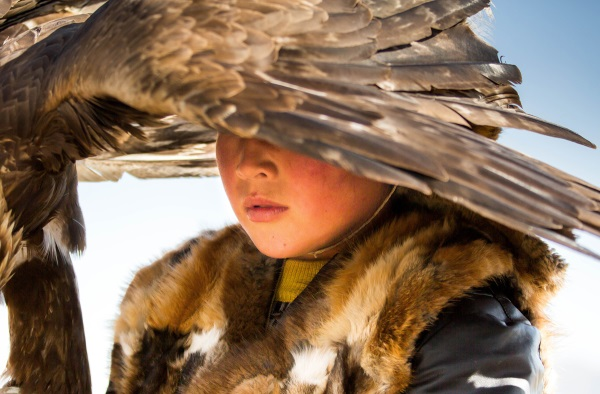 A young Kazakh boy with his eagle which will perform at the traditional Eagle Festival held in Bayan-Ölgii, Mongolia . Eagle hunting is a heritage passed from father to son, generation after generation by the Kazakh people of the Altai mountains.