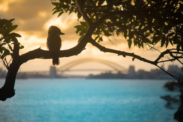 در این تصویر زیبا نمایی از بندر زیبای سیدنی را می بینید و پل معروفی که آن دور دست قرار دارد.