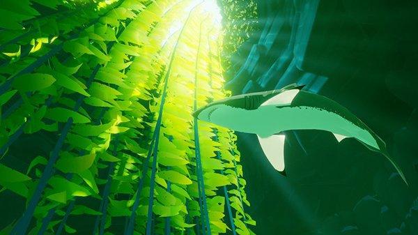 Shark.0