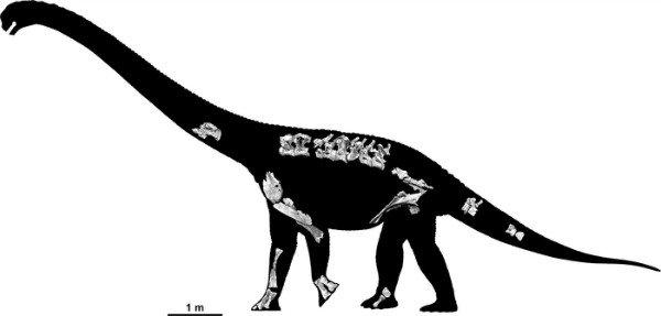 Savannasaurus-elliottorum-skeleton-Travis-R-Tischler