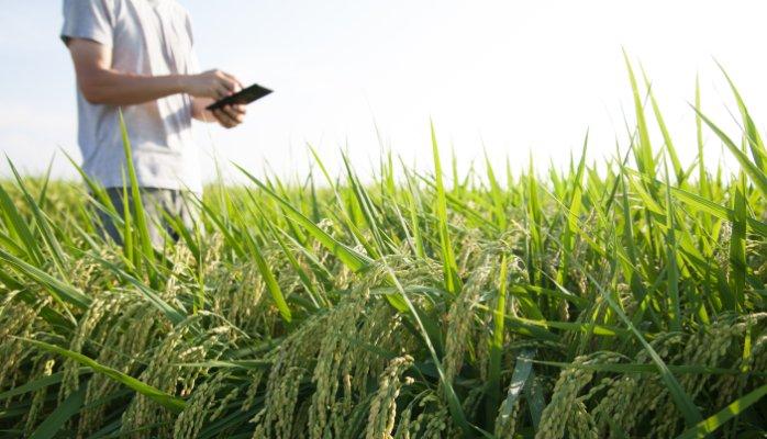 استارتاپ های کشاورزی