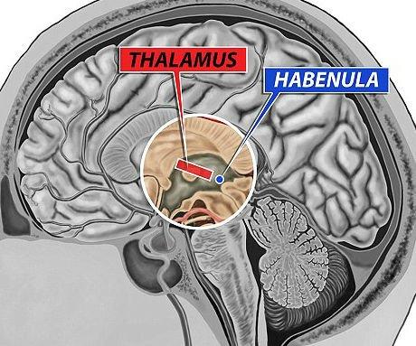 Lateral Habenula