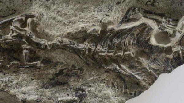 کشف قدیمی ترین فسیل مارمولک