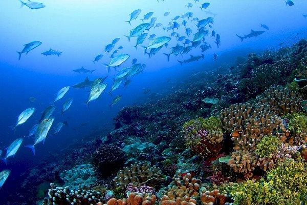 تاثیر گرمایش زمین بر رنگ اقیانوس ها