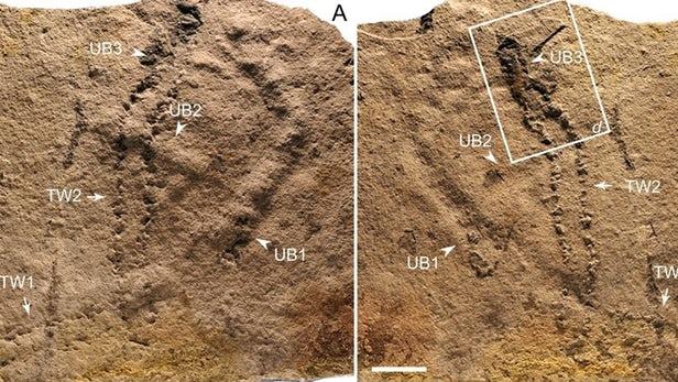 قدیمیترین جای پای حیوانات در کره زمین کشف شد