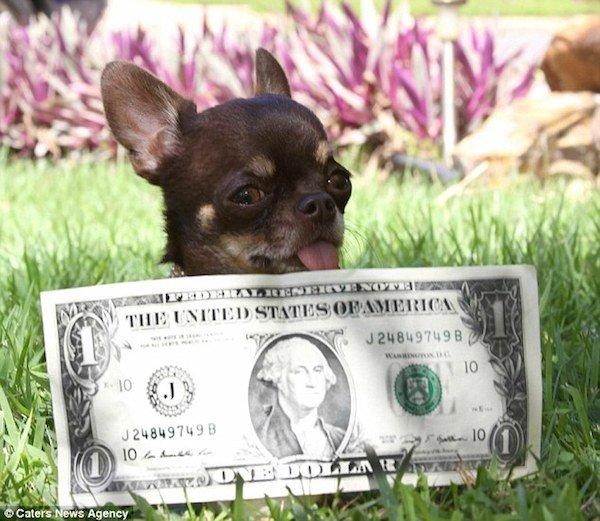 کوچک ترین سگ دنیا