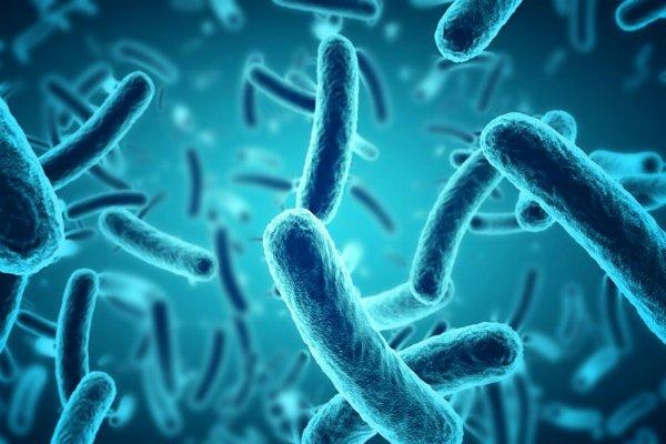باکتری در سیارات دیگر