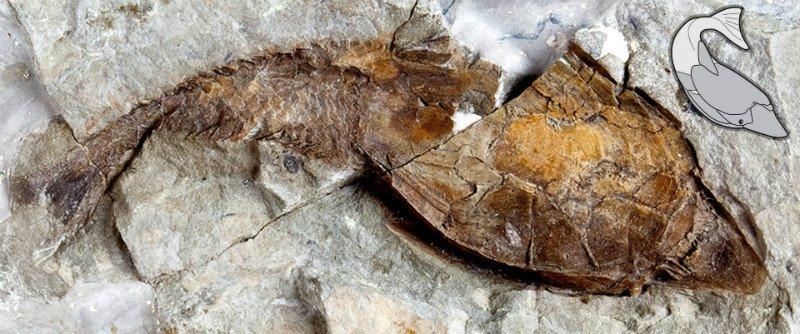 قدیمی ترین فسیل