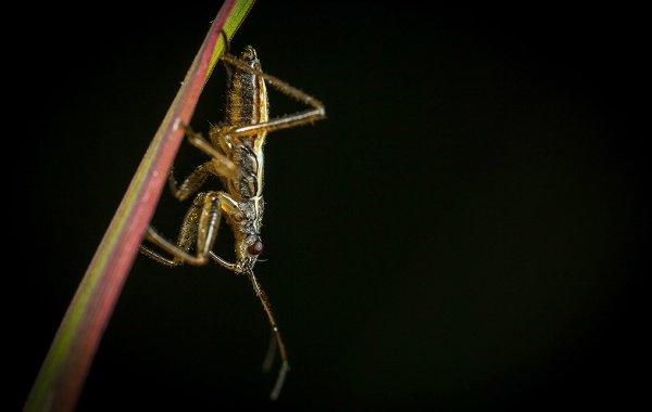 حشرات خوراکی