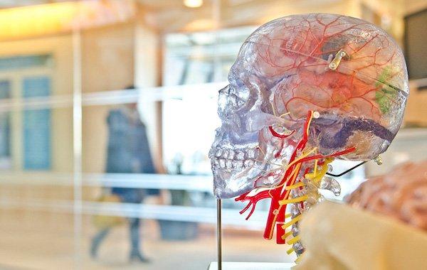 کوچک شدن مغز و استرس
