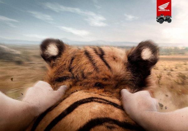 honda_tiger