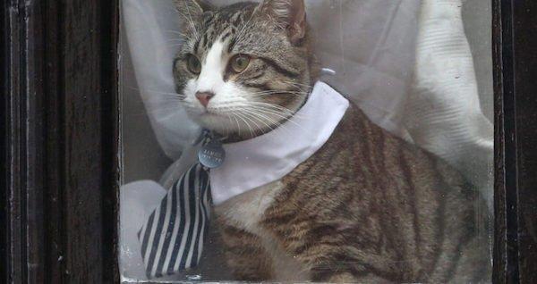 گربه جولیان آسانژ