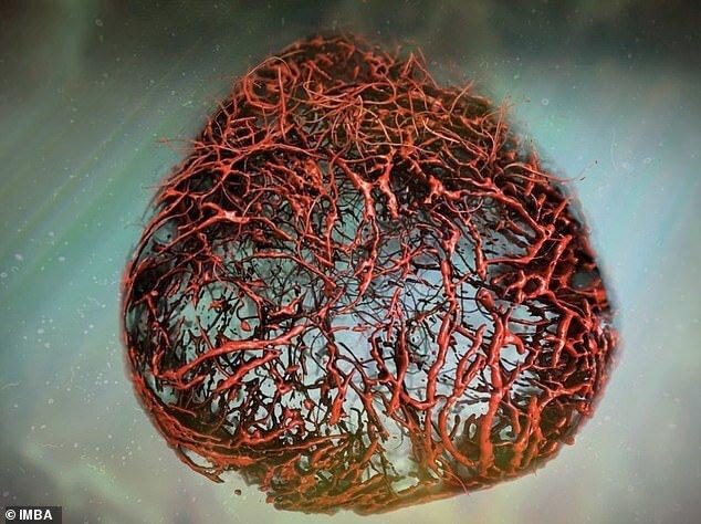 رگ های خونی