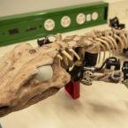 این فسیل رباتیک نحوه حرکت سمندر باستانی را شبیهسازی میکند